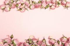 Beira de rosas secas pequenas no fundo cor-de-rosa Lugar para o texto Fotos de Stock