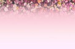 Beira de Rose Wall como o fundo imagens de stock royalty free
