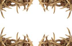 Beira do Antler dos cervos Foto de Stock Royalty Free