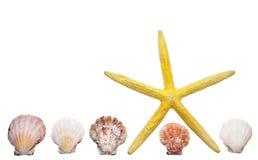 Beira do escudo e dos Starfish Imagens de Stock Royalty Free