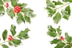 Beira do galho do azevinho, decoração do Natal Fotos de Stock Royalty Free