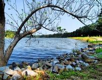 Beira do lago Foto de Stock