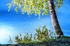 Beira do lago  Imagens de Stock