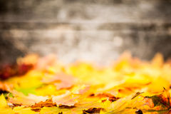 Beira do outono das folhas amarelas Imagens de Stock Royalty Free