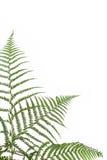 Beira dos ferns imagem de stock royalty free