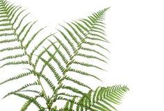 Beira dos ferns foto de stock royalty free