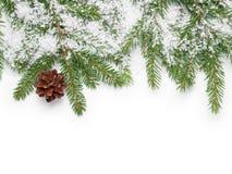A beira dos galhos do abeto, o cone e a falsificação nevam fotografia de stock