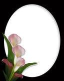Beira dos lírios de Calla no oval preto Imagens de Stock Royalty Free