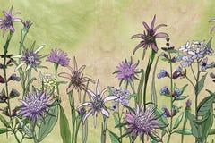 Beira floral sem emenda fotografia de stock