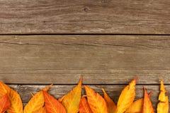 Beira inferior das folhas de outono coloridas na madeira rústica Fotografia de Stock Royalty Free