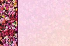 Beira lateral de Rose Wall com fundo desvanecido foto de stock