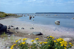 Beira-mar com rochas e flores Fotos de Stock