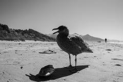Beira-mar Dino Imagem de Stock