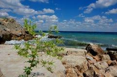 Beira-mar do Eryngium das flores O Mar Negro Crimeia, sobre Feodosiya Imagens de Stock Royalty Free