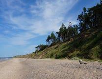 Beira-mar e floresta Foto de Stock Royalty Free