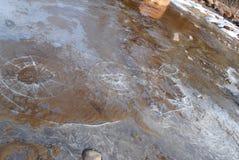 Beira-mar gelado da mola fotografia de stock