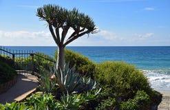 Beira-mar que ajardina na praia no Laguna Beach sul, Califórnia da garganta do azulão-americano Foto de Stock