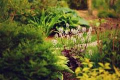 Beira misturada do jardim com heuchera e outros perennials fotografia de stock