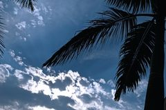 Beira nebulosa da árvore de céu azul e de coco Foto de Stock Royalty Free