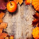 Beira ou quadro com abóboras alaranjadas e colorido da ação de graças Imagem de Stock