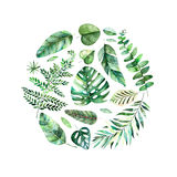 Beira redonda do quadro da aquarela colorida com as folhas tropicais coloridas Foto de Stock