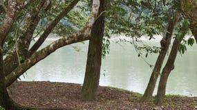 Beira-rio em guacamayas dos las, chiapas Imagem de Stock