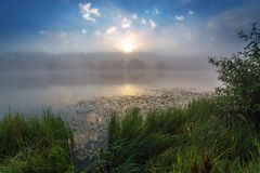 Beira-rio nevoento no nascer do sol do verão com grama alta fotos de stock
