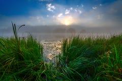 Beira-rio nevoento no nascer do sol do verão com grama alta imagens de stock