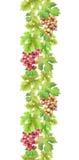 Beira sem emenda com uva e folhas Quadro da aquarela Imagem de Stock
