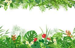 Beira sem emenda das plantas tropicais ilustração do vetor