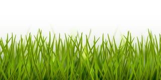Beira sem emenda realística ou quadro da grama verde do vetor isolada no fundo branco - natureza, ecologia, ambiente, jardinando fotografia de stock