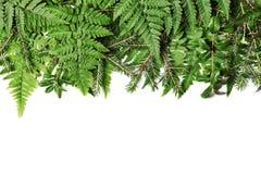 Beira verde com folhas frescas Fotografia de Stock Royalty Free