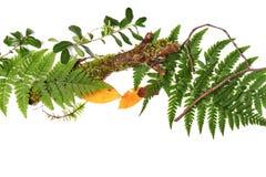 Beira verde com folhas frescas Imagens de Stock
