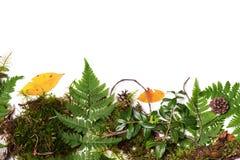 Beira verde com folhas frescas Fotos de Stock Royalty Free