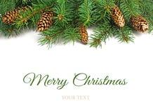 Beiras da árvore de Natal Fotos de Stock