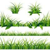 Beiras da grama verde da mola ajustadas Foto de Stock