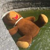 Beispiel des Vandalismus: Teddybär in einem Brunnen stockfotografie