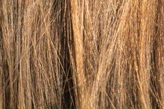 Beispielnatürliches blondes glattes Haar Stockfotografie