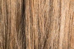Beispielnatürliches blondes glattes Haar Lizenzfreies Stockfoto