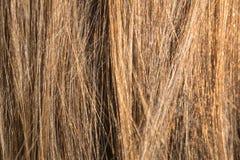 Beispielnatürliches blondes glattes Haar Lizenzfreie Stockfotografie