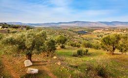 Долина Beit Netofa Стоковые Фотографии RF