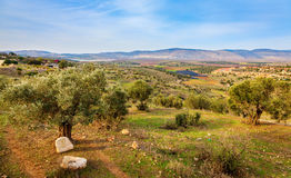 Beit Netofa Valley Royalty Free Stock Photos