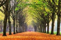 De gang van de herfst royalty-vrije stock afbeeldingen