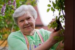 Bejaarde dame in de tuin Royalty-vrije Stock Afbeelding