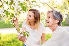 Bejaarde grootmoeder en kleindochter onder de boom in de lenteaard royalty-vrije stock afbeelding