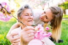 Bejaarde grootmoeder in rolstoel met kleindochter in de lenteaard stock afbeeldingen