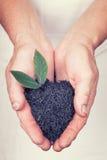 Bejaarde handen die zwarte thee met blad met uitstekend s houden Stock Fotografie