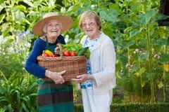 Bejaarde Holding twee een Mand van Veggies samen royalty-vrije stock foto's