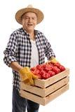 Bejaarde landbouwer die een krat houden dat met appelen wordt gevuld stock afbeelding