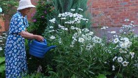 Bejaarde oudere vrouwelijke vrouw die in de bloemen van het tuinwater werken stock videobeelden